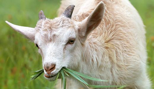 5 pasos indispensables para exponer tus productos agrícolas y exportarlos